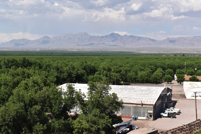 From atop the Stahmann cleaning plant in New Mexico's Mesilla Valley, you can see the pecan orchard all the way back to the surrounding valley and mountains.