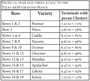 This table shows each row's number of terminals with pecan clusters in the Texas A&M orchard's grafted block as well as the variety of each row.