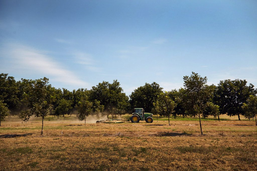 a tractor driving through the pecan orchard