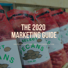 "Image for the 2020 Marketing Guide, shows the words ""The 2020 Marketing Guide"" with a background of pecans in 5-pound sacks."